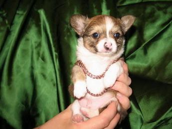 Маленькие собачки 21 16 самые маленькие